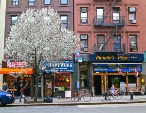 york 83 & 84 St blossom
